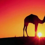 The Top Four Unusual Things To Do In Morocco