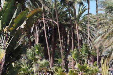 Seaside Palm Beach Hotel in Maspalomas