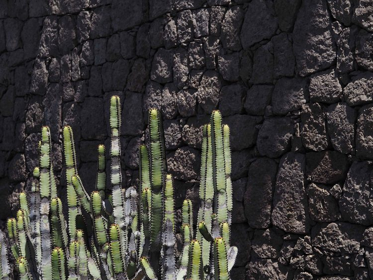 cactus against a black wall